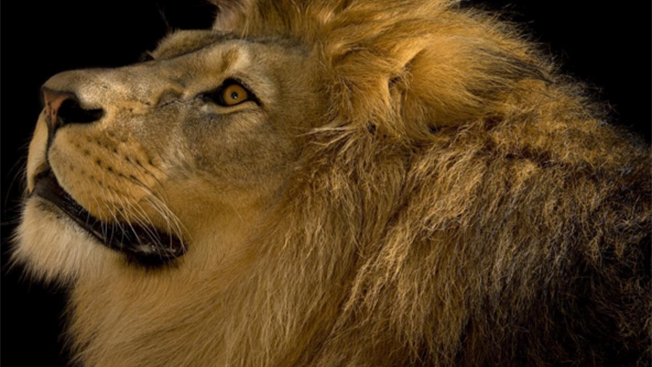 NatGeo Remains King of the Social Media Jungle in Updated List of